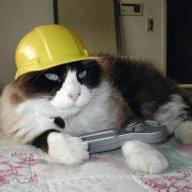 kittyworker